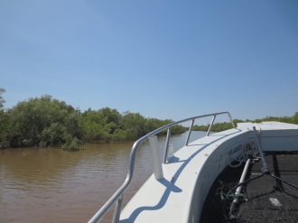 Boating to the mangroves