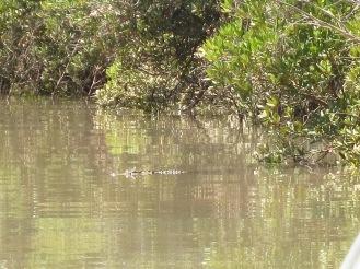 First croc in Oz